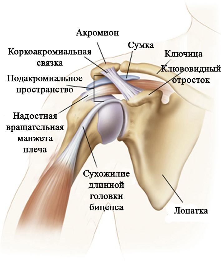 Неврологическое заболевание плечевого сустава болезни локтевых суставов рук симптомы лечение